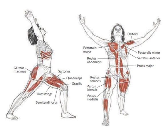 Physics Of Yoga Virabhadrasana I