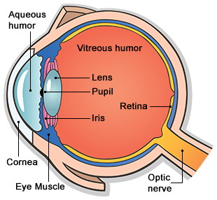 Parts of the eye diagram of the eye ccuart Image collections